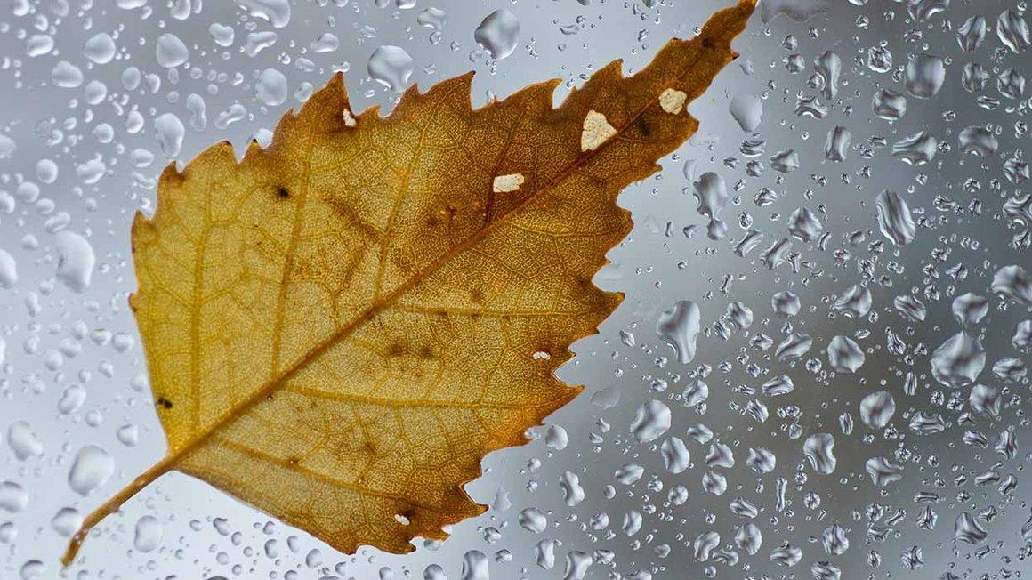 Herbstzeit ist Krankheitszeit